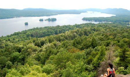 Serviciile oferite de ecosistemele forestiere